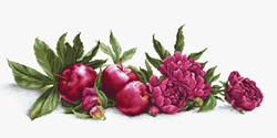 Borduurpakket Peonies and Red Apples - Luca-S
