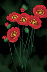 Voorbedrukt borduurpakket Red Poppies on black  - Needleart World
