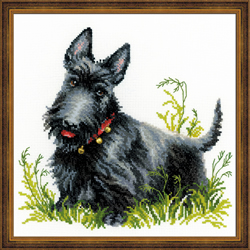 Borduurpakket Scottish Terrier - RIOLIS