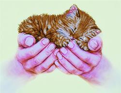 Diamond Dotz Precious Kitten - Needleart World