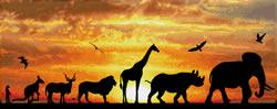 Diamond Dotz African Sky - Needleart World