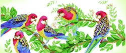 Diamond Dotz Eastern Rosella Gathering - Needleart World