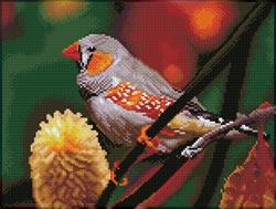 Diamond Dotz Gouldian Finch - Needleart World
