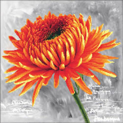 Voorbedrukt borduurpakket Orange Dahlia - Needleart World