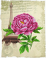 Voorbedrukt borduurpakket Romantic Rose - Needleart World